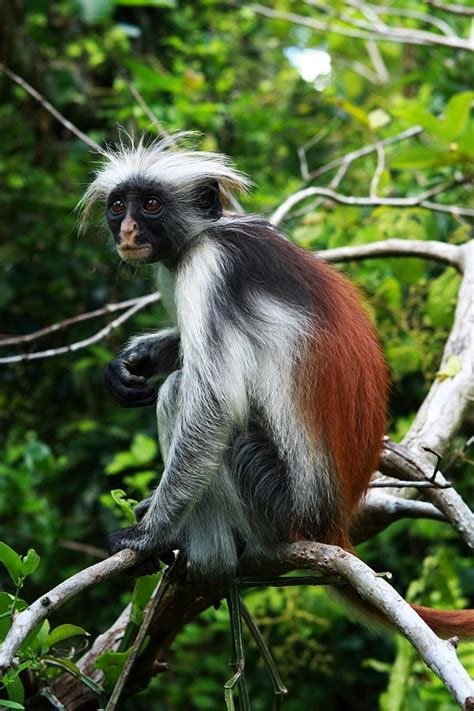 What is the most common color of monkeys? - Quora