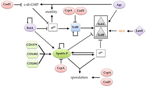 Toxins   Free Full-Text   The Regulatory Networks That