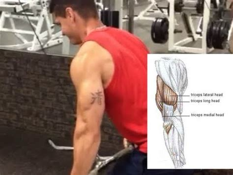 Best Exercises to Target Each Triceps Head - YouTube