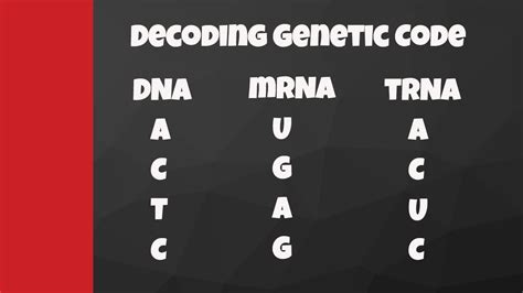 Decode from DNA to mRNA to tRNA to amino acids - YouTube