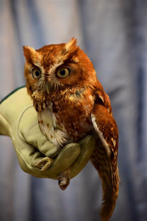 Owl found injured at National Zoo on the mend | WTOP