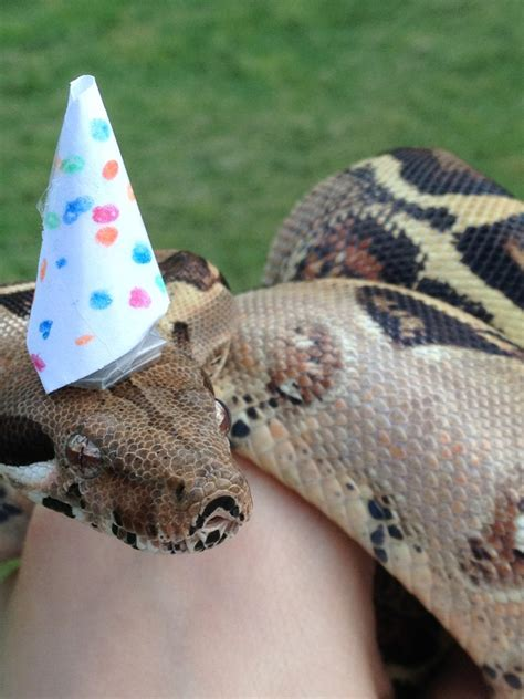Snakes Wearing Hats – Page 2 – Sick Chirpse